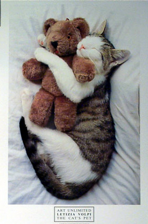 Cat Hugging The Teddy Bear