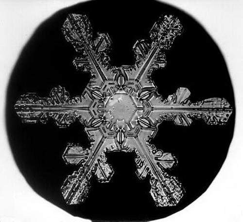 Bentley_Snowflake10