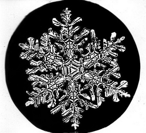 Bentley_Snowflake02