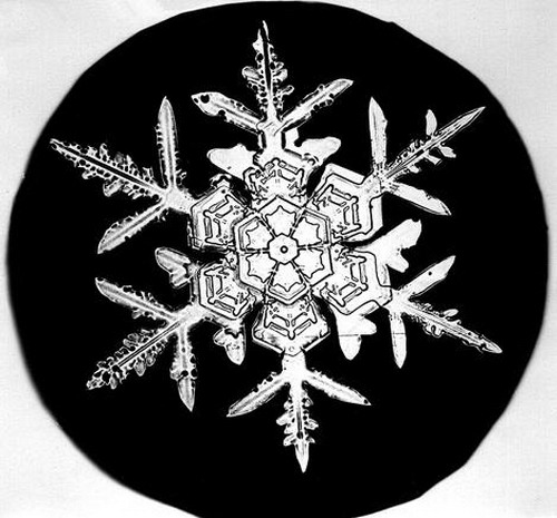 Bentley_Snowflake03