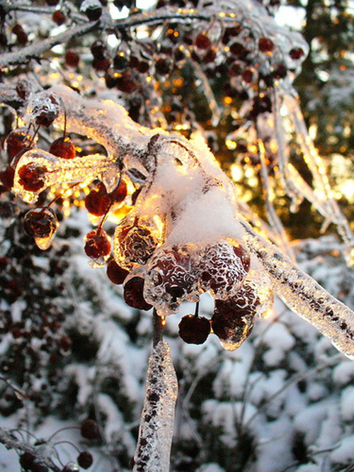 Frozen Fruits 04