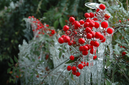 Frozen Fruits 07