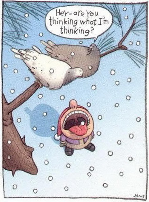 Winter Snow Funny Picture