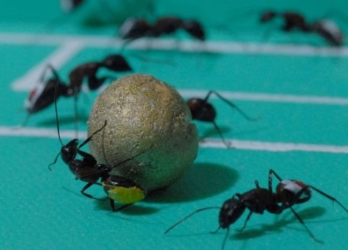 Funny Ants Pictures