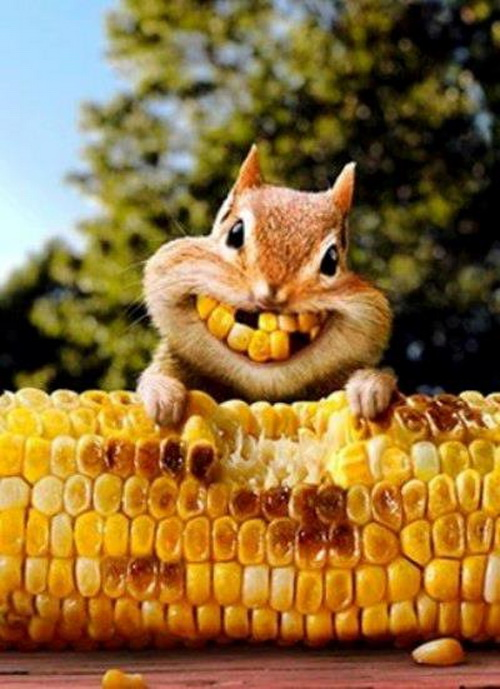 smiling squirrel funny picture