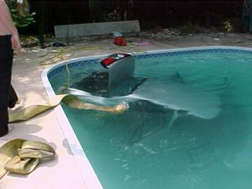 Swimming Cars Weirdomatic
